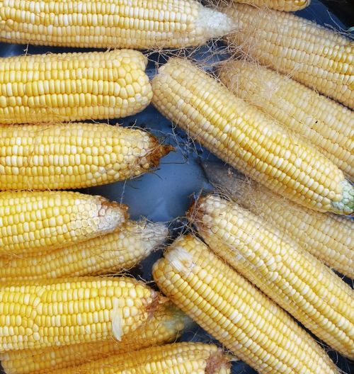 High angle view of sweetcorns boiling