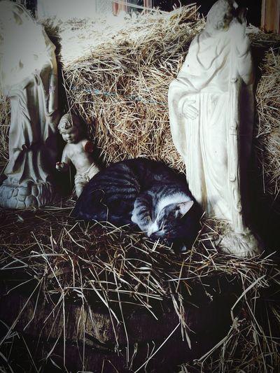 Descanso debaixo de olho! Gato Cats Descanso Tired Rest