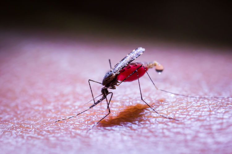 Mosquito Blood Donation Blood Orange Vaccine For Allergies Vaccines❌🚫❎💉 Animal Themes Animals In The Wild Blood Close-up Day Insect No People One Animal Outdoors Vaccine Vaccine Depot Vaccine Development Vaccine Vial Vaccines
