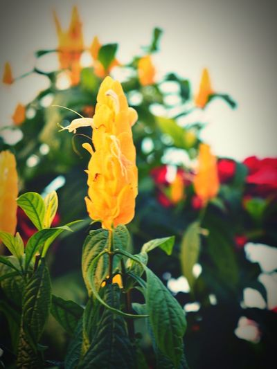 Flowers, Nature And Beauty Flowers,Plants & Garden Flower Bushes And Trees Nature Nature Photography Enjoying Life Natural Dooars__trip Lataguri Potrait Beauty In Nature