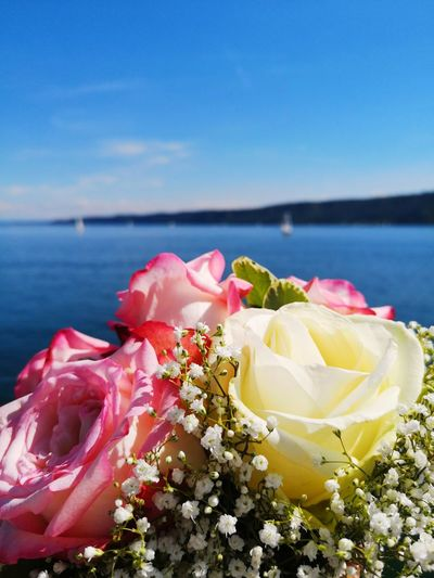 Sea Flowers Roses Bodenseebilder Bodensee Romantic Sky Romantik Flowers ❤️ Seascape Flower Flower Head Water Sea Beach Pink Color Red Peony  UnderSea Close-up Blooming Plant Life Botany