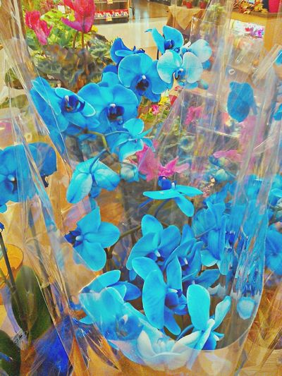 i love Nature Orchids Blue Orchids Flowers 🌸🌹🍀🌺🍃🍂