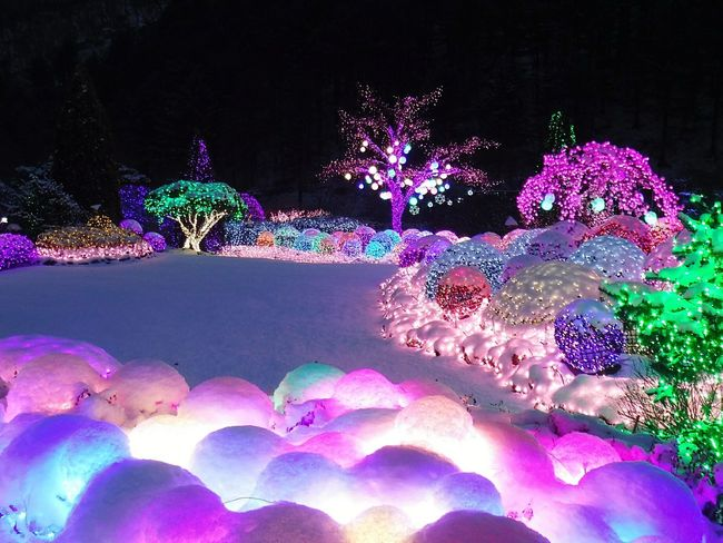 Garden Of Morning Calm Winter In Korea Winter Night Cotton Candy Snow Snowy Garden Magical Place Light And Darkness  Colorful View Colorful Garden Garden In Winter Nature