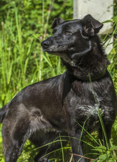 Black dog looking away