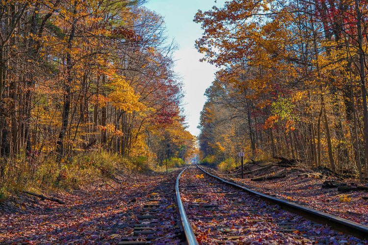 High Angle View Of Railroad Track In Forest During Autumn