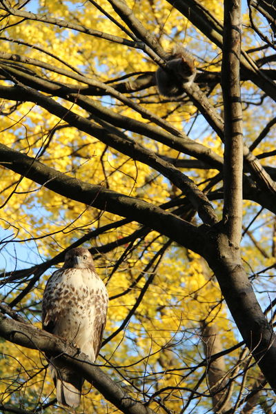 Low Angle View No People Tree Nature Branch Sunlight Low Angle View Tree No People Nature Branch Sunlight Outdoors Close-up Day Beauty In Nature Animal Themes Bird Photography Бостон Taking Photos EyeEm Best Shots EyeEm Best Edits Olga Mulugeta Bird Of Prey Beauty In Nature