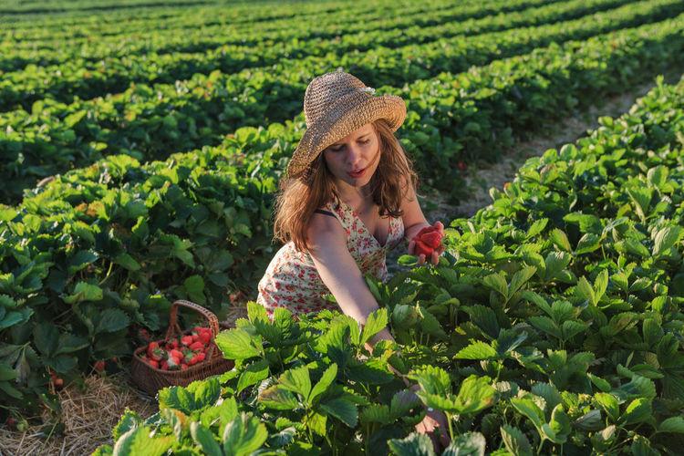Spring Strawberry handpicking Girl Field Dunajska Luzna Slovakia outdoor Fruit Landscape Sunrise