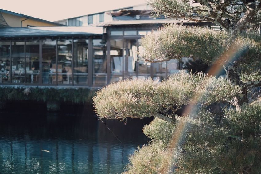 VSCO Yamanashi Water Built Structure Architecture Plant Building Exterior Day Nature Reflection Tree No People Growth Waterfront Outdoors Sunny Building