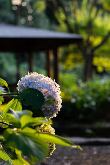 Beauty In Nature Close-up Day Flower Flower Head Flowering Plant Focus On Foreground Fragility Freshness Green Color Growth Leaf Nature No People Outdoors Park Plant Plant Part Purple Selective Focus Tree Vulnerability