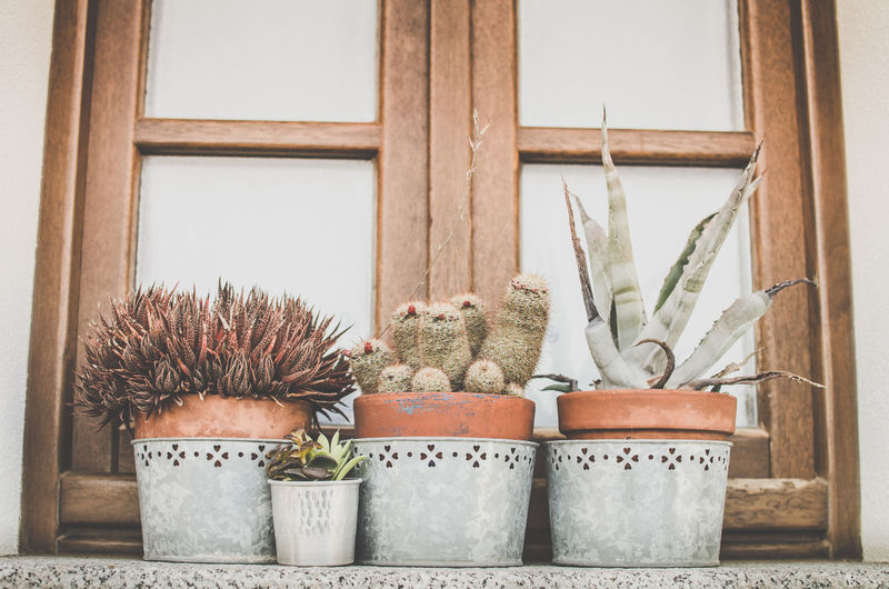 Potted Plant No People Succulent Plant Plant Day Cactus Growth Nature Wood - Material Indoors  Container Decoration Built Structure Window Architecture Group Of Objects Flower Pot Wall - Building Feature Houseplant Mammal