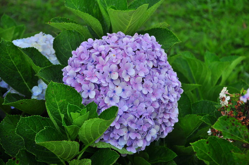 Purple Plant Nature Green Color Leaf Growth Close-up Beauty In Nature Flower No People Outdoors Flower Head Day Fragility Freshness