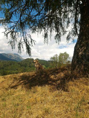 Maya Dog Summer Views