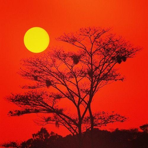 Alafacci UaU WOW Sun Red Three Africa Savanah Savana Earth Loveafrica Niggah Non Centra Yellow Beautyful  Nice Maghreb