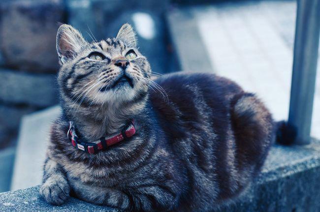 May 8,2015 Hiroshima Cat Pentax