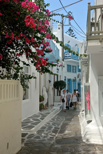 street view with white buildings and flowers in Mykonos with people walking and tourist shops . Architecture Building Exterior Built Structure Plant Real People Building Adult Men City Walking Group Of People Nature Women People Day Full Length Outdoors Flower Flowering Plant Mykonos,Greece Streetphotography Street Street View Tourist Tourism Shops Souvenir Travel Destinations Bouganville Flower Greek Architecture White Building Blue Window