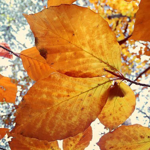 Showcase: November Leaves Fall Colors Fall Leaves IPS2016Closeup
