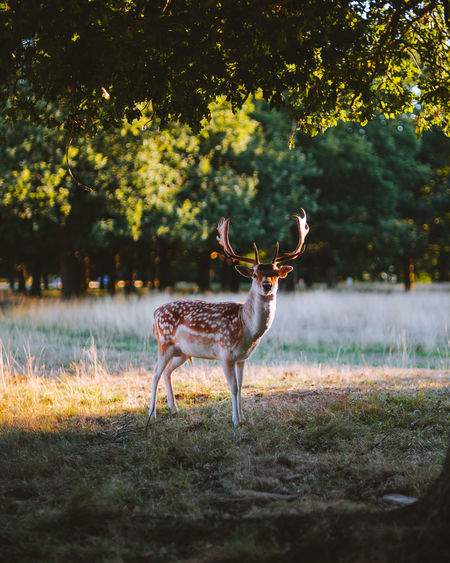 glance EyeEm Selects Eyeem Market EyeEmBestEdits Fresh On Market 2018 Fresh On Eyeem  Africa Deer Nature Wildlife Photography Tree Horned Herbivorous Stag Safari Animals