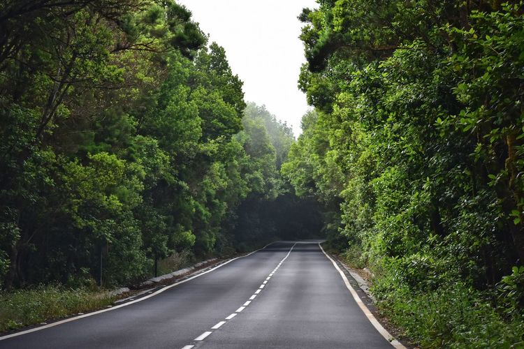 foggy road in garajonay national park on la gomera canary island in Spain Foggy La Gomera Canary Island Island Green Lush Road Trip Forest Empty Road Road Marking Mountain Road Asphalt vanishing point Winding Road Diminishing Perspective The Way Forward