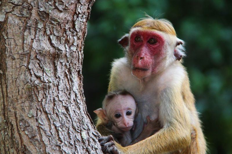 Close-up of monkey with infant by tree trunk