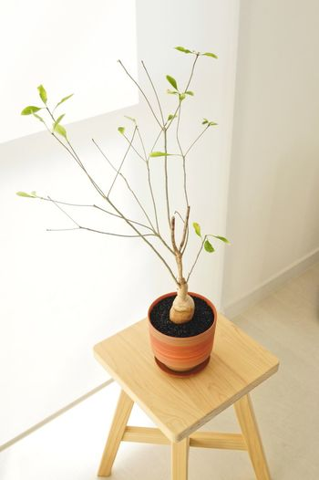 Plant Decoration No People Growth Nature Potted Plant Table Beauty In Nature Tree Home Interior Plant Part Wood - Material Wall - Building Feature Plant Stem Indoors  Houseplant Leaf Seat Vase Flower