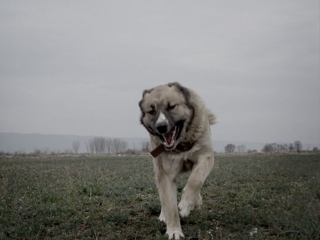 Designattack Attack Dog Photography