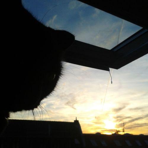 Stubentiger STiNKEMiNKE Sunset