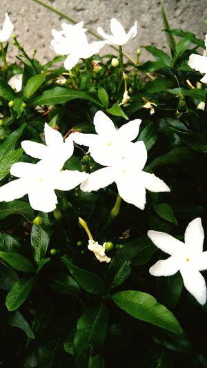 As pure as this.... Whiteflower Flowers White Garden Mothernature Savetheplanet Motherearthisamazing EyeEm