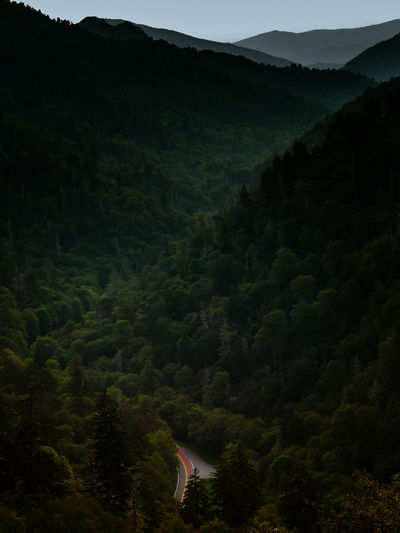 Scenic view of forest and mountains