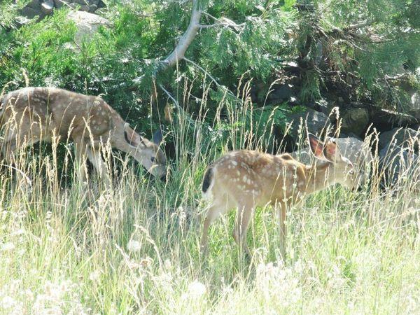 Deer Taking Photos Enjoying Life
