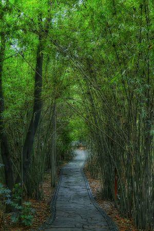 Walking Alone... Bamboo Forest Pandaresearchbase in Chengdu China Hdrphotography Beautiful Nature Garden Traveling Eye4photography  EyeEm China Landscapes With WhiteWall