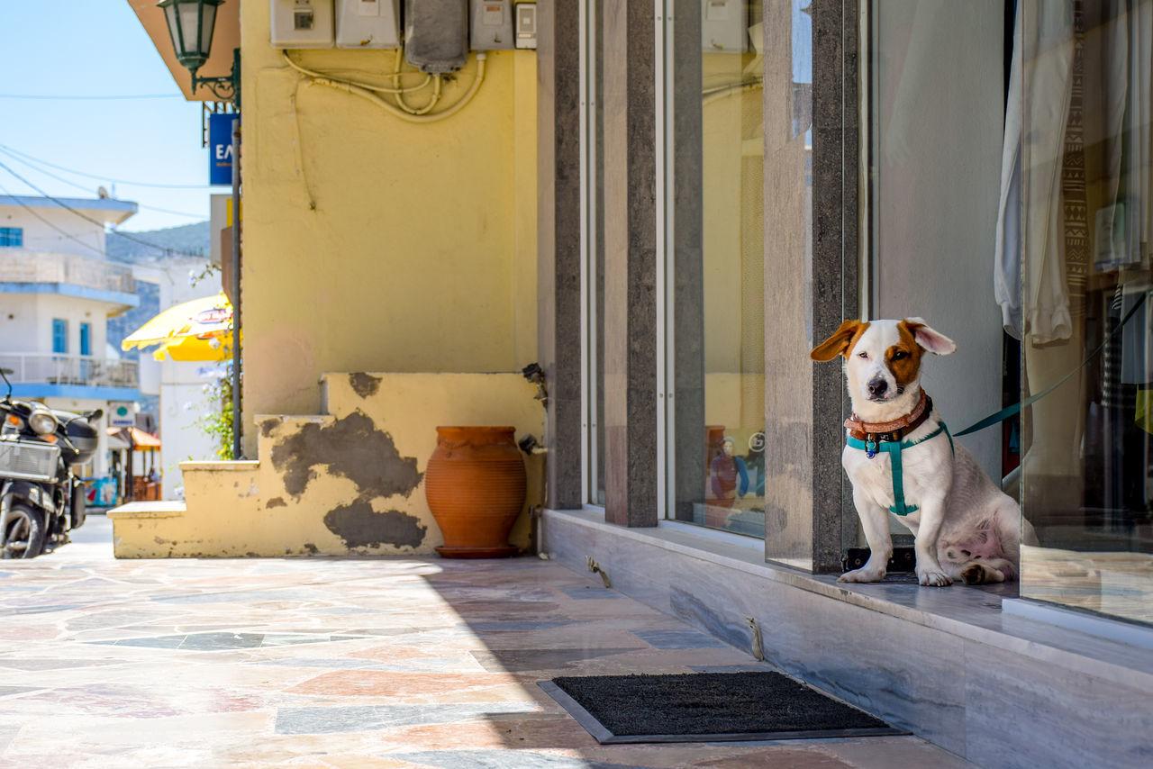 Dog Sitting At Doorway