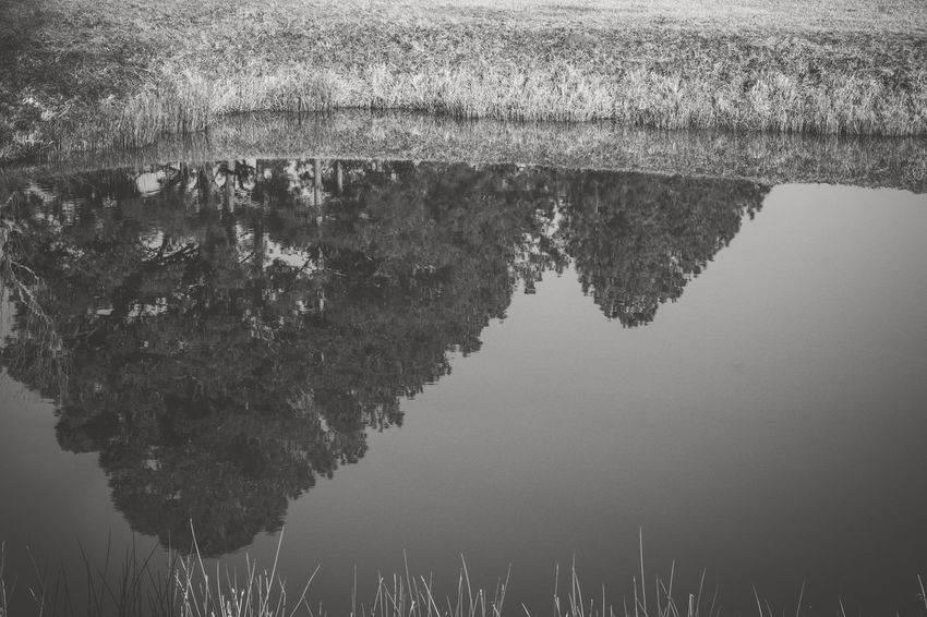 Reflection Nature Water Agriculture No People Outdoors Field Tree Scenics Beauty In Nature Waterfront Lake