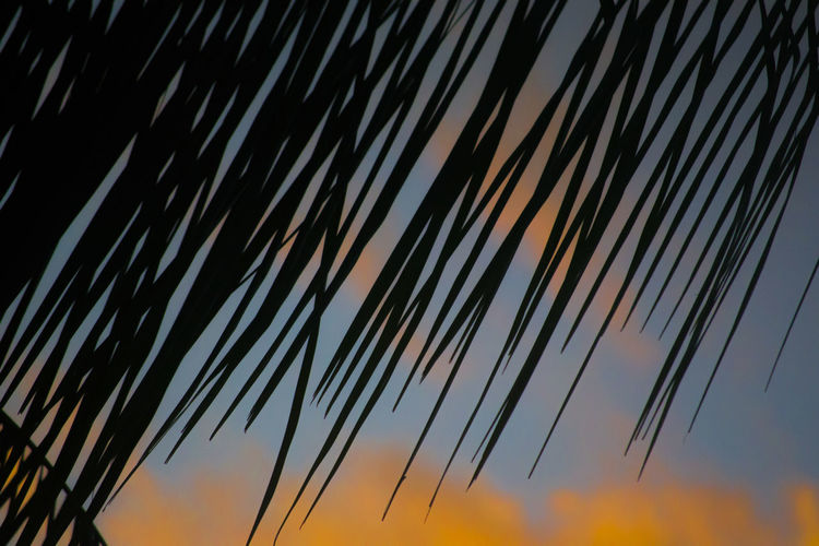 Palm Tree Beauty In Nature Clouds Colors Frond Growth Nature No People Outdoors Palm Leaf Palm Tree Scenics Sunrise Sunset Tranquility Vibrant Color
