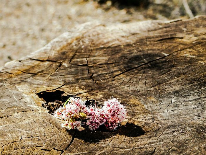 Photographic Memory this is the place my father and i used to have our. little talks about anything and everything. i still go here whenever i want to feel close to him . i leave flowers here on this treestump whenever i visit . Fatherdaughter Check This Out Missing You R.I.P Daddy