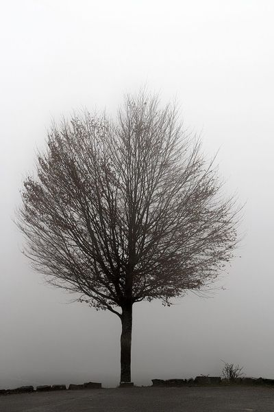 árbol Niebla Tree Nature Plant Beauty In Nature No People Silhouette Tranquility Copy Space Scenics - Nature Autumn🍁🍁🍁