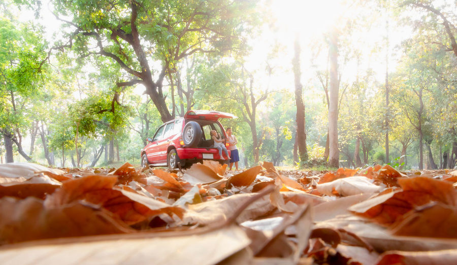 Child Car Fall Autumn Autumn Leaves Travel Transportation Vehicle Tree Plant Nature Sunlight Day Forest One Person Land Outdoors Adult Real People Occupation Casual Clothing Selective Focus Full Length Young Adult Plant Part Mode Of Transportation Surface Level Obscured Face