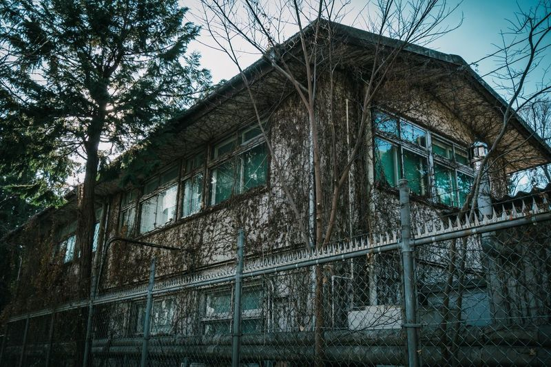 Low Angle View Tree Built Structure Architecture Plant No People Day Building Glass - Material Old Growth Outdoors Abandoned Metal Sky Building Exterior Nature Reflection Pattern Branch