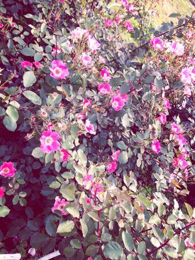 夕日と花 Taking Photos