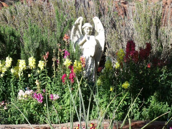 Sedona Roadtrip Nature_collection Beautiful Nature Garden Photography Flower Collection Caught My Eye Angels