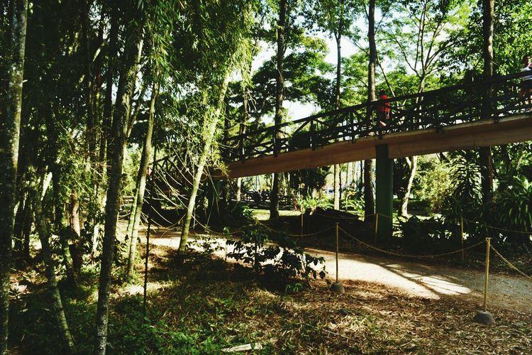 Color Portrait Colombia Nature Parquedelcafe