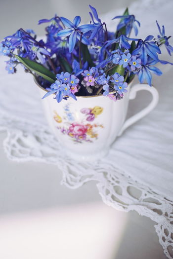 blue springflowers in an old cup Scilla Scilla Cup Old Cup Tablecloth White Background Copy Space Flower Head Flower Bouquet Females Multi Colored Pastel Colored Purple Beauty Wedding Close-up Blossom Flower Arrangement Bunch Of Flowers Lavender Colored Plant Life In Bloom Botany