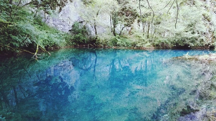 blue lagoon Water Reflection Nature Tree Beauty In Nature No People Tranquility Day Outdoors Growth Tranquil Scene Standing Water Scenics EyeEmNewHere Branches Landscape Blue Water Blue Lagoon Colors Of Nature The Great Outdoors - 2017 EyeEm Awards