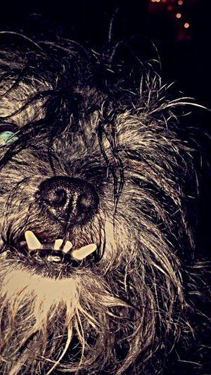 My Dog Falcore Crazy Face Ugly Cute EyeEm Gallery 😚 Mutt