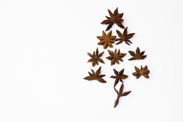 star tree The