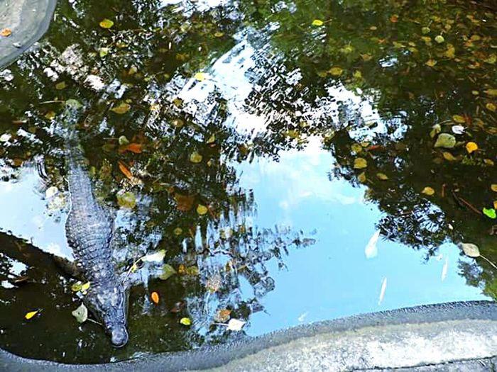 Glitch Hideandseek RipplesEffect Skyreflection CockyCrocodile