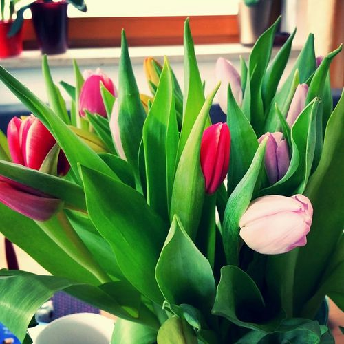 Some tulips Flowers Taking Photos Home Sweet Home Roland Kaniewski