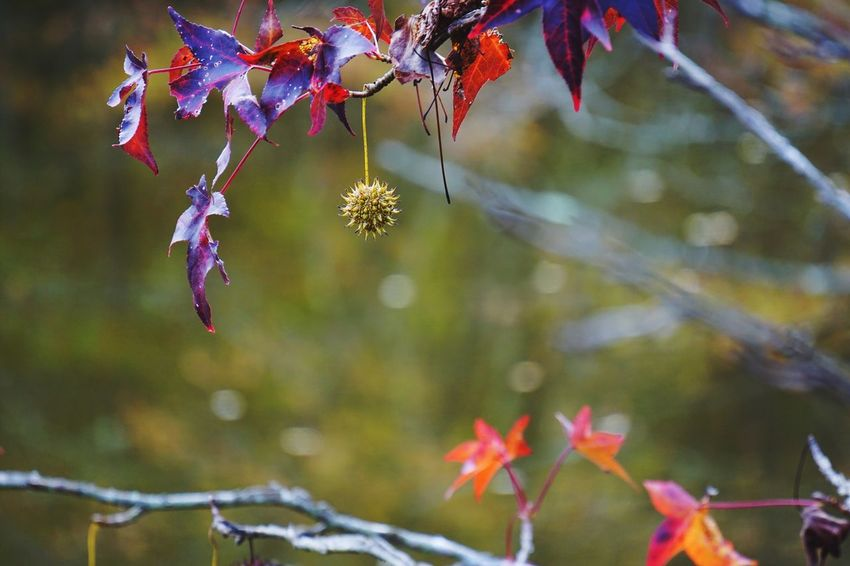 EyeEm Selects Nature Autumn Growth Leaf Beauty In Nature Tree Day Flower Fragility Outdoors Focus On Foreground Branch No People Change Close-up Plant Freshness