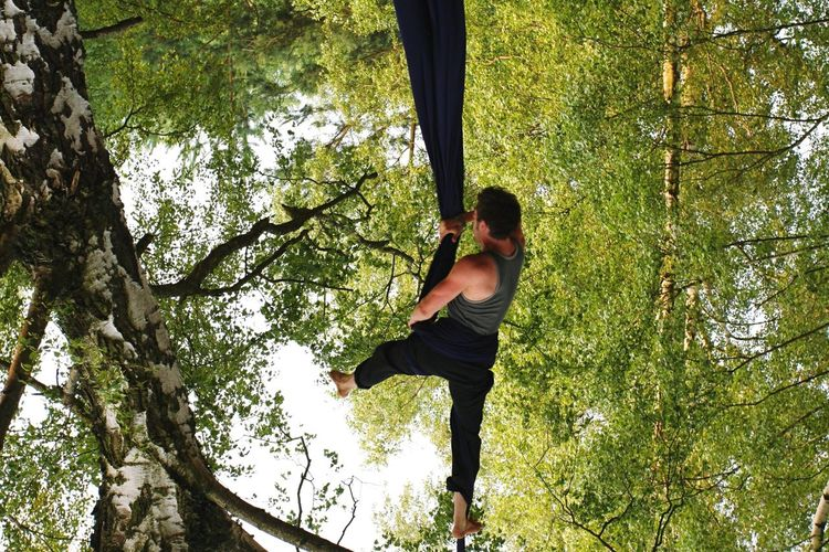 Acrobats Hanging On Fabric Amidst Tree