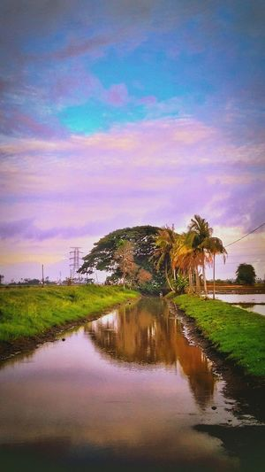 Growth Field Beauty In Nature Nature At Alor Setar Malaysia Nature_collection
