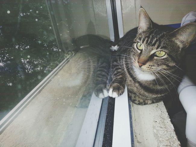 Cat Cutepets Humanesociety Cats